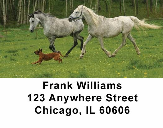 Horses Checks Address Labels - 3