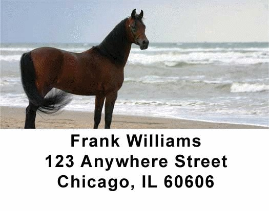 Horses Checks Address Labels - 4