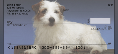 Jack Russell Terrier Photos Checks