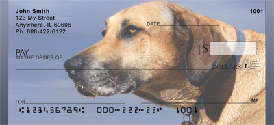 Yellow Lab Closeup Checks - 2