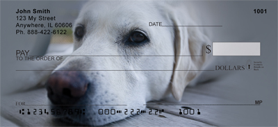 Yellow Labrador Portraits Checks - 2