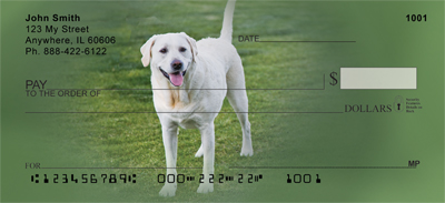 Yellow Labrador Portraits Checks - 4