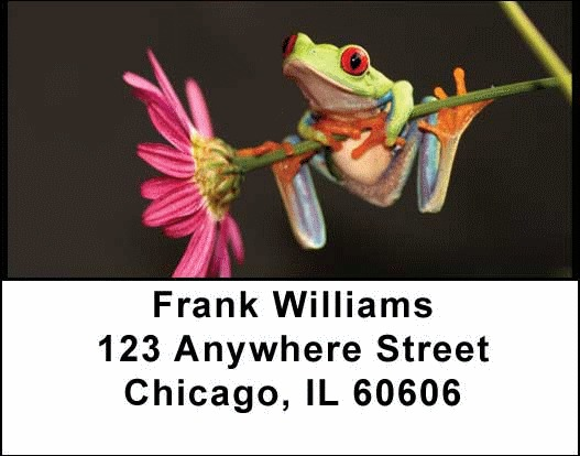 Frogs Address Labels - 2