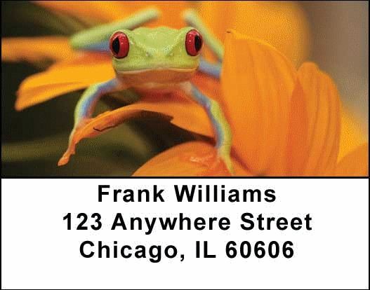 Frogs Address Labels - 3