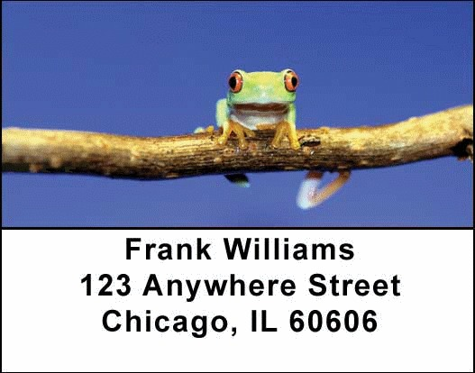 Frogs Address Labels - 4