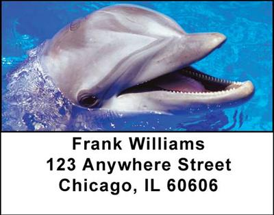 Dolphins Address Labels - 2