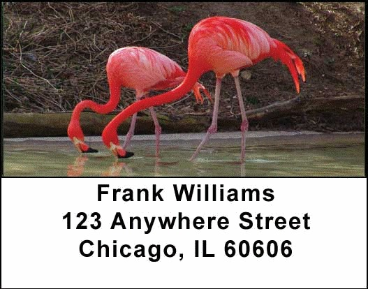 Flamingos Address Labels - 4