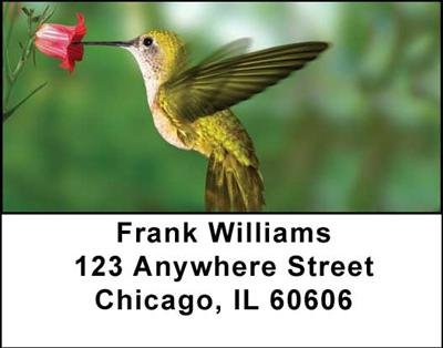 Hummingbirds Address Labels - 1