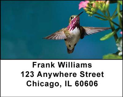 Hummingbirds Address Labels - 2