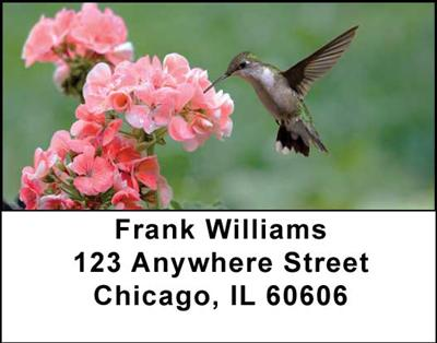 Hummingbirds Address Labels - 3