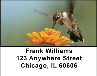 Hummingbirds Address Labels - 4