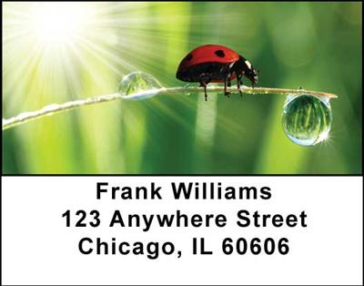 Ladybugs Address Labels - 1