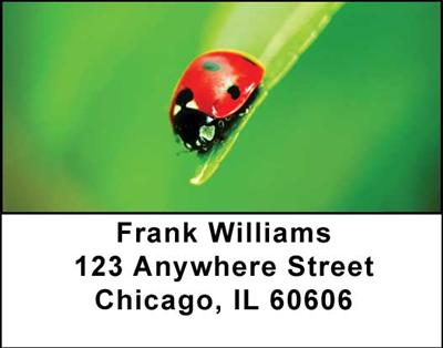Ladybugs Address Labels - 4