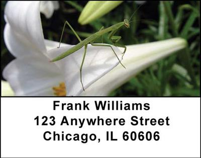 Praying Mantises Address Labels - 1