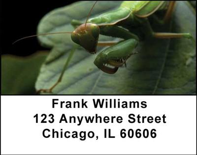 Praying Mantises Address Labels - 2