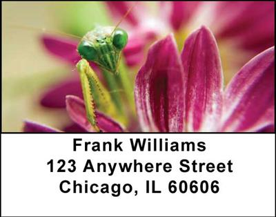 Praying Mantises Address Labels - 3