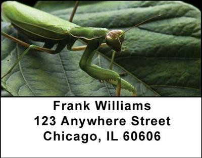 Praying Mantises Address Labels - 4