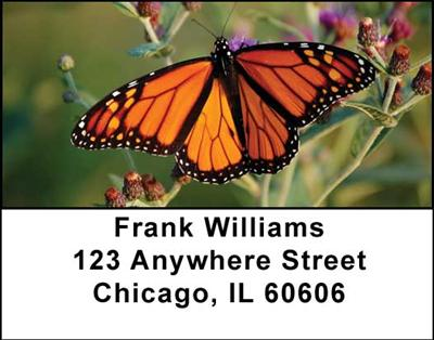 Monarch Butterflies Address Labels - 1