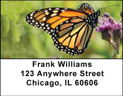 Monarch Butterflies Address Labels - 4