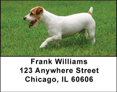Jack Russell Terriers Address Labels - 2