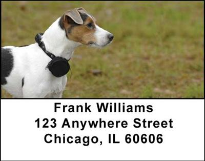 Jack Russell Terriers Address Labels - 3