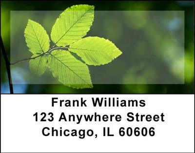Foliage Address Labels - 2