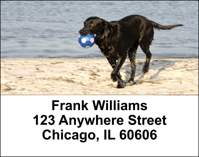 Black Labradors Address Labels - 2