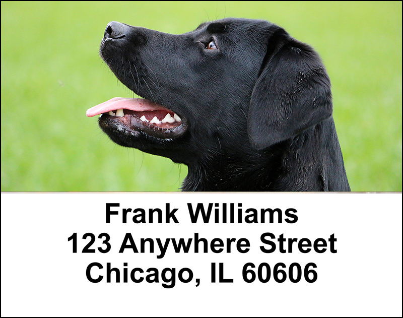 Black Labradors Address Labels - 3