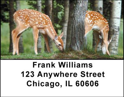 Deer Fawn Address Labels - 2