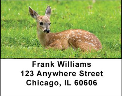 Deer Fawn Address Labels - 3