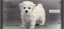 Adorable Bichons Personal Checks