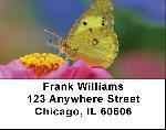 Butterfly Dreams Address Labels