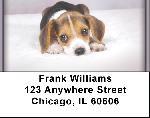 Beagles Address Labels