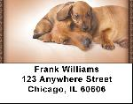 Dachshund Puppies Address Labels
