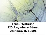 Dandelion Address Labels